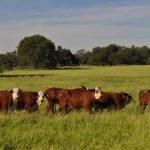 Nutrición intensiva para planteos ganaderos intensivos