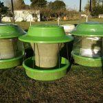 Importancia de los minerales en el desempeño reproductivo en el ganado bovino